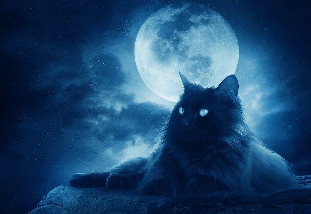 10 магических тайн, которые хранит ваша кошка