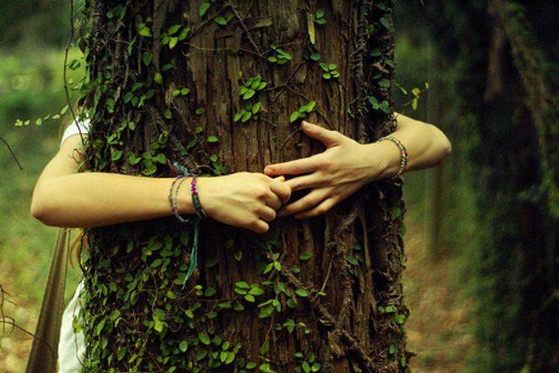 Целительная энергия деревьев